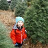10 Christmas Tree Farms Near NYC Where You Can Cut Your Own