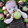 Best Apple Picking Orchards and Farms Near NYC