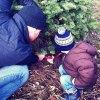 Cut Your Own Christmas Tree Farms on Long Island