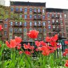 Lower East Side: A Guide to the Best Kid Spots