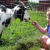 Animal Farms and Petting Zoos for Boston Kids