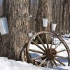 Outside Fun: Maple Sugaring Activities for Kids in Westchester