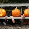Harvest Festivals, Pumpkin Patches, and Hayrides in NYC