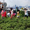 50+ Ways to Keep NYC Kids Off Screens This Summer