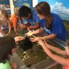 25 Reasons to Visit Woods Hole With Kids