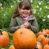 Pick Your Own Pumpkin Patches in Western Connecticut