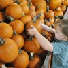 Fall Festivities for the Whole Family at Froberg's Farm