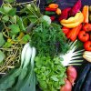 Boston-Area CSA and Farm Shares that are Great for Families