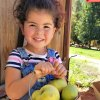 Apple Picking near LA? You Bet There Is!