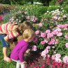 Free Things to Do This Summer with Kids in the Hartford Area