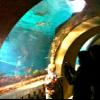 Atlantis Slideshow: Top 15 Things to Do with Kids at Atlantis Paradise Island