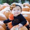 Where to Find Pumpkin Patches Around Houston