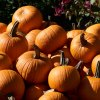 26 Fall Harvest Festivals Near Philly: Pumpkins, Apples, and Scarecrows, Oh My!