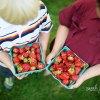 Strawberry Festivals Around Boston This Summer