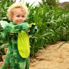 Corn Mazes and Haunted Mazes for LA and Orange County Kids