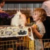 Weekend Fun: Harvest Fairs, Waterfalls, and a Celebration of Nature