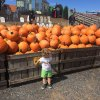The Best Fall Pumpkin Picking for Families in the Philly Area