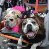 Weekend Fun for Boston Kids: Halloween Eve, Kid Convention, Pet Parade; October 29-30