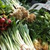 Connecticut Farmers' Markets and Farm Stands Kids Will Love