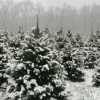 Cut Your Own Christmas Tree Farms in New Jersey