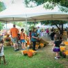 Weekend Fun For Houston Kids: Festivals, Pumpkins, Zoo Boo, Oct 15-16