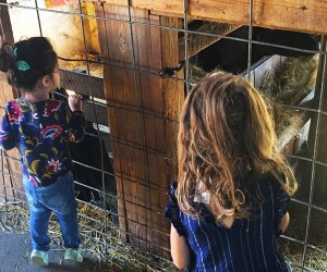 Meet some furry new friends at these kid-friendly farms. Photo by the author