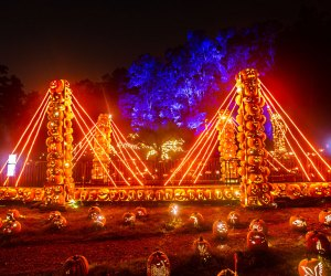 Meander through the 18th-century landscape to discover the breathtaking displays at The Great Jack-O-Lantern Blaze. Photo by Tom Nycz