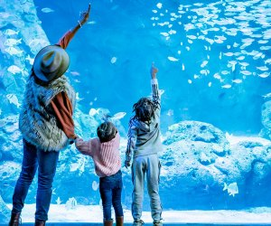 See spectacular animals in a historic setting at the St. Louis Aquarium at Union Station.