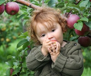 It's apple picking season! Photo by Tim & Selena Middleton/CC BY 2.0