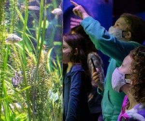 Discover underwater wonders at the Shedd Aquarium. Photo courtesy of Shedd Aquarium