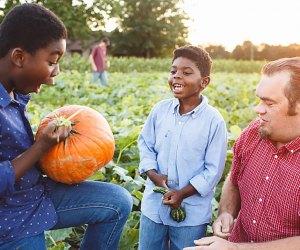 Fall pumpkin picking at Johnson's Corner Farm. Photo courtesy of the farm