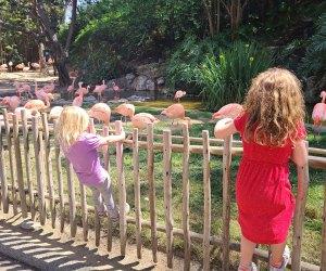 Secrets of the LA Zoo: flamingos la zoo