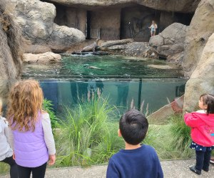 Secrets of the LA Zoo: Sea Cliffs exhibit with sea lions and harbor seals