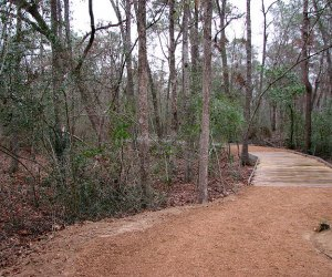 A trail in the woods at Houston Arboretum and Nature Center