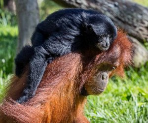 The Best Zoo in Every State : San Diego Zoo