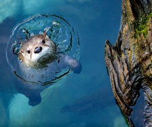 The Best Zoo in Every State: Woodland Park Zoo