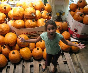 Pumpkins are a hallmark of fall - find the best patches near NYC with our guide to the best things to do this fall near NYC with kids