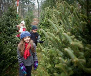 Find the perfect tree at a New Jersey Christmas Tree farm. Photo via Flickr.
