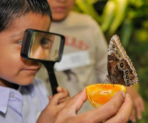The Butterfly Conservatory at the AMNH. Photo by Misael Barragon for AMNH