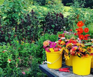 pails of fresh flowers with fields of fresh flowers in the background