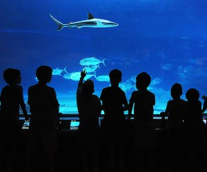 Day Trip To Njs Adventure Aquarium Whats New And Best To See