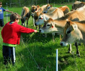 Learn the value of a hard day's work with Family Farm Day at at Appleton Farm. Photo by Kate McMahon