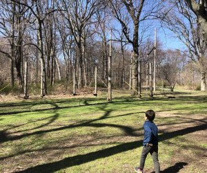 Alley Pond Park is spacious and filled with old-growth trees making it easy to forget the urban jungle is just beyond its borders.