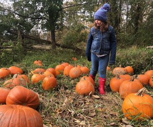Pumpkins of every shape and size are available at Warrups Farm.