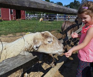 Visit the petting zoo at Alstede Farms for a chance to meet the animals. Photo by Rose Gordon Sala