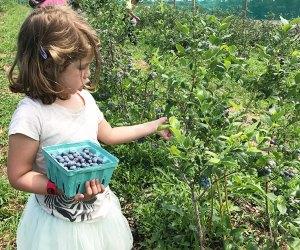 Girls picking blueberries at Alstede Farm