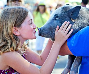 Kiss a pig at America's Family Pet Expo. Photo by Keren Lynn Photography