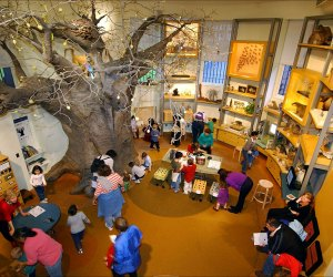The Discovery Room at the American Museum of Natural History more than lives up to its name. Photo by R. Mickens/AMNH