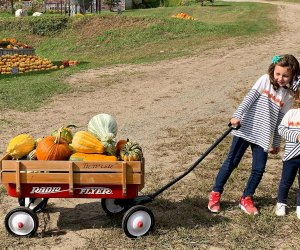 The harvest has begun, so you can pick your perfect pumpkin. Photo courtesy of Angevine Farm