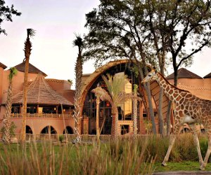 A stay at Orlando's Animal Kingdom Lodge is a special treat. Photo courtesy of Walt Disney World Resort Hotels